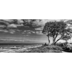 Der Windflüchter von Ahrenshoop, jetzt kaufen in 60/90 cm